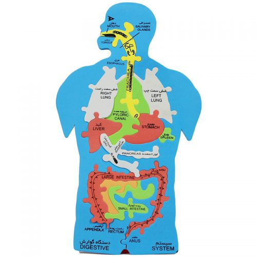 anatomi2